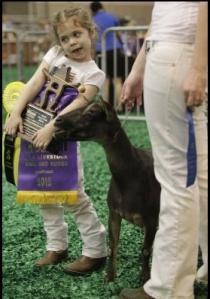 Grand Champion Kid. Image by Melissa Phillip. Houston Chronicle
