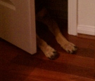 All rights reserved. Peace for paws. Copyrighted German Shepherd's signature. NO permissions granted