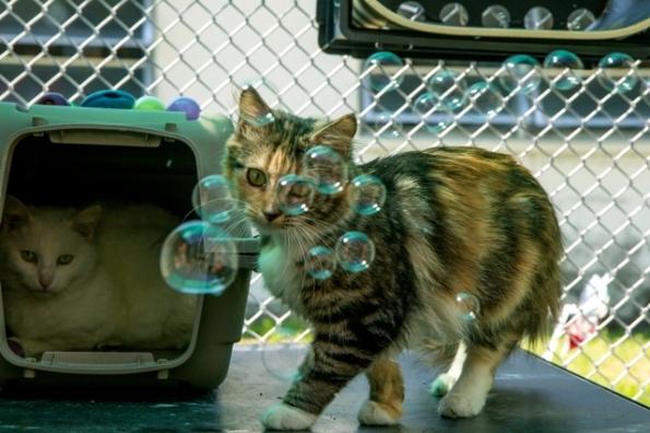 Texas Cat Rescue Groups