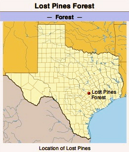 Lost Pines Forest. (Image. Wikipedia.org)
