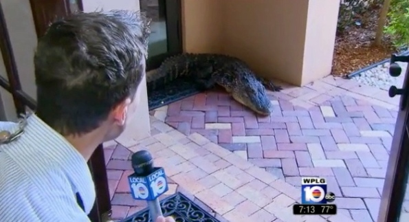 Alligator's porch  interview in Parkland. Florida  (Screenshot/ www.clickorlando.com)