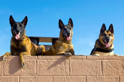 Roc, Kisma, and Jampy. Safely retired, but they haven't forgotten their buddies (Luke AF Base(USAF.Colbert/US public domain: work of military/Commons.wikimedia.org)