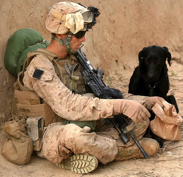 us marines evans and allie usmc photobellegardeus public domain militarydefend dept 100221 m 5645b 009commons wikimedia org Dogs Stronger Than Pitbull