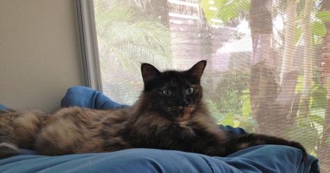HRH RC Cat.
