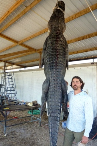 Giant gator. (Image-Austin Kimbrough:khou.com)