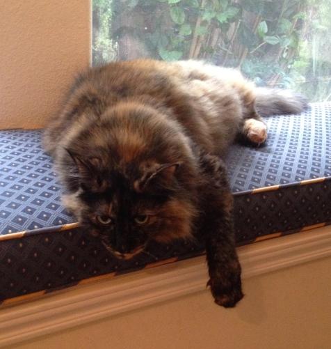 large fluffy cat on window seat