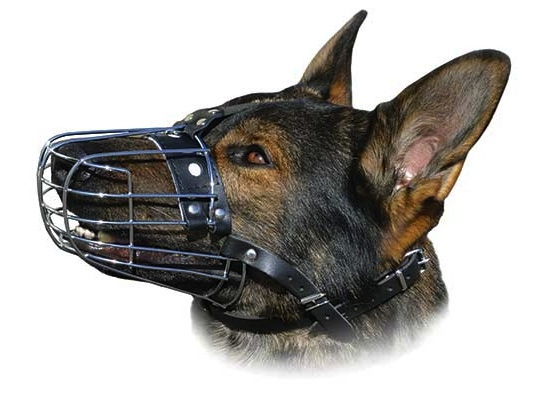 Can A Muzzle Stop Your Dog From Barking