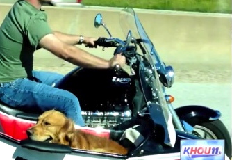 dog in sidecar headed to Lone Star Rally in Galveston, TX