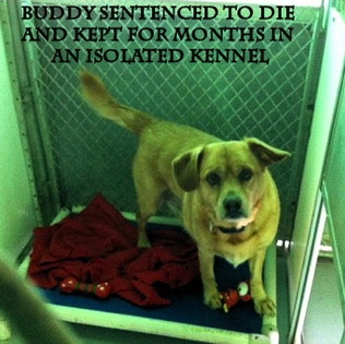 (Buddy in jail. San Antonio Care Services/examiner.com