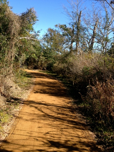 Down the refurbished trail. Great! No mud - or gators