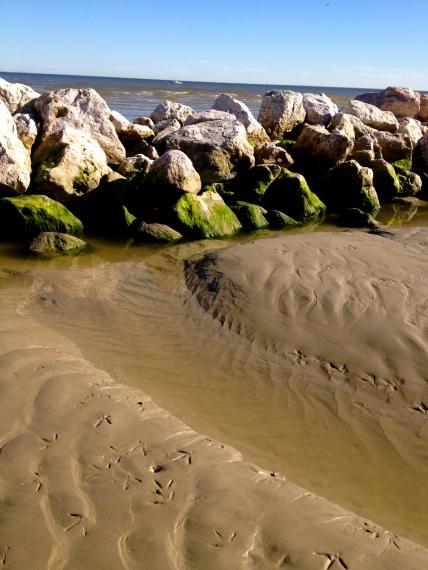 shore birds and deer tracks deep mud