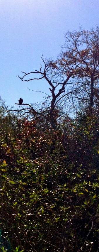 bird sunning