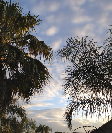 sky with palms