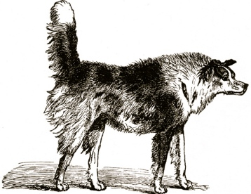 "1872. May/Darwin ""Expression of Emotion in Man and Animal's""/US PD:pub.date/Commons.wikimedia.org"