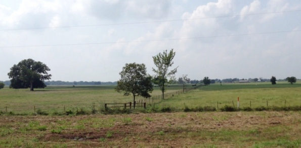 East Texas fenced pasture. No permissions granted. all rights reserved. copyrighted
