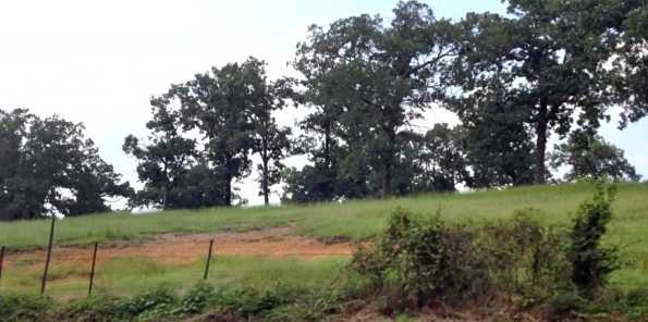 East Texas red dirt hill.copyrighted. no permissions granted. all rights reserved