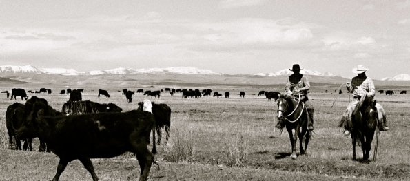 cattle herd. Wyoming Land Trust. Cowboys/Commons.wikimedia.org)