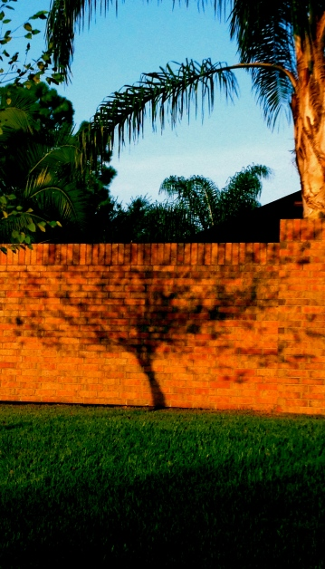 tree shadow on wall. No permissions granted. All rights reserved. Copyrighted