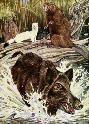 Wild boar running as mink and beaver watch.1921.Argosy of Fables.Cooper/Bransom,ill./NYPub.Lib/USPD:pub.date/commons.wikimedia.org)