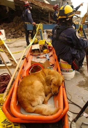 Exhausted Bretagne resting at Ground Zero. (Andrea Booher/Fema/today.com)
