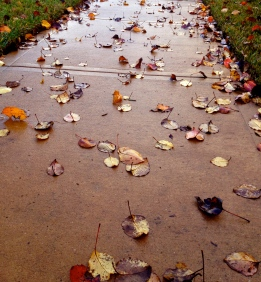 All rights reserved. no permissions granted. copyrighted fall leaves on sidewalk