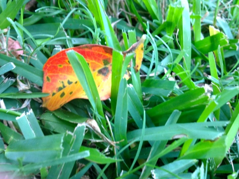 Fall leaf, no permission granted. All rights reserved, copyrighted