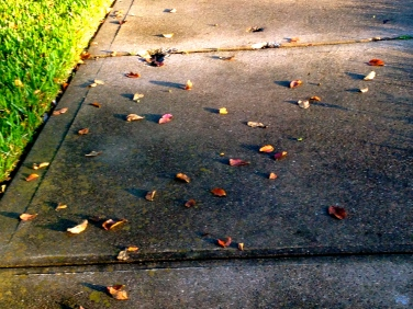 all rights reserved. no permissions granted. copyrighted. Fall-ish Leaves on sidewalk