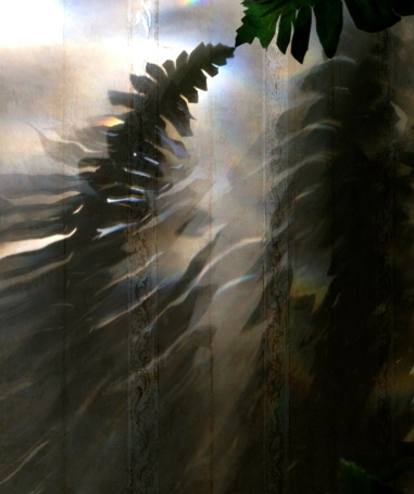 ferns.shadows. no permissions granted, all rights reserved, copyrighted