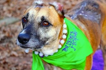 Hero dog. Susie's beautiful../American Humane Association/today.com:pets))