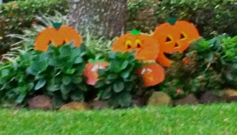 Halloween pumpkins in yard. All rights reserved. No permissions granted. Copyrighted