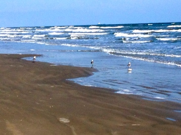 Shorebirds wading. All rights reserved. No permission granted. Copyrighted