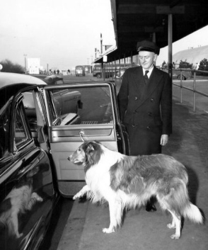 Lassie in NYC (1955-1956)Batten,Barton, Durstine, Osborn/US PD: pub.date,no cr notice/Commons.wikimedia.org