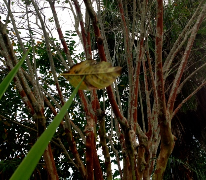no permissions granted. Yucca holding leaf. All rights reserved. Copyrighted