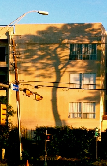 all rights reserved. Tree shadow on building. No permissions granted. Copy righted