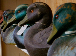 VIntage duck decoys. (Flickr/schmuck-by-nature/Commons.wikimedia.org