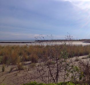 All rights reserved. Copyrighted. No permissions granted.coastal prairie as Pine Gully flows into Galveston Bay
