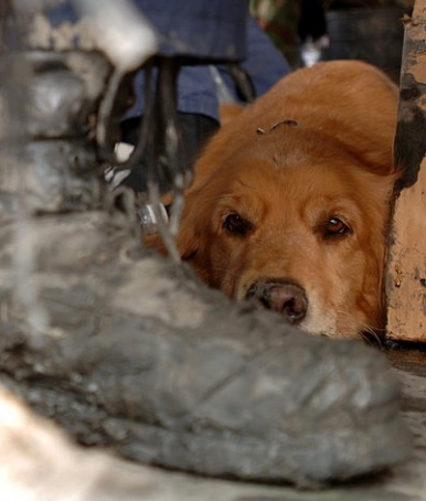 Rescue dog by muddy shoe. After Hurricane Katrina, 2005. FEMA, Augustino/USPD.fed.agency photo/Commons.wikimedia.org)