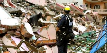Search and rescue dog searching rubble pile in Nepal. Fairfax Co Search and Rescue/FB/USAID