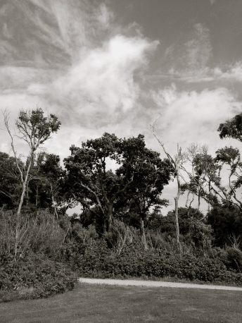 Trees (NO permissions granted)in black and white(All rights reserved. copyrighted).