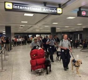 Search dogs returning home with handlers at airport. (Fairfax County Fire and Rescue /FB)