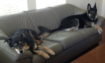 couch dogs - ALL rights reserved. NO permissions granted. Copy righted