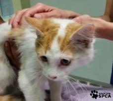 Kirby at SPCA (Houston SPCA Facebook)