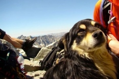 dog Rysa. On Poland's highest mt.(screenshot www.mysanantonio)