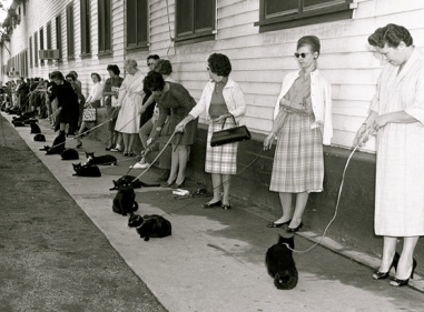 line of women holding cats on leashes.(1961. casting call in Hollywood for film/ Los Angeles Times/UCLA lib/USPD: no cr, pub.date/Commons.wikimedia.org)