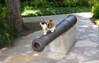 Bella standing on Alamo canon. Image by TX General Land Office
