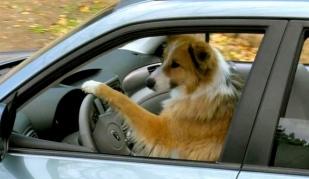 Dog driver. Facebook. soca.fortbendcounty:photos