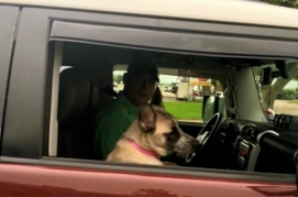 dog passenger. facebook.soca.fortbendcounty