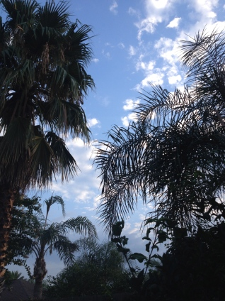 NO permissions granted for this image of Palms and a few clouds in sky. ALL rights reserved. Copy righted