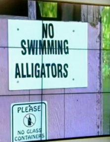 Marina No swimming Alligator sign.(click2houston.com screenshot)