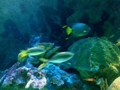 Fish in a hurry. NO permissions granted. ALL rights reserved. Copyrighted